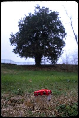 madelon_galland_10_big-tree,-little-stump_10