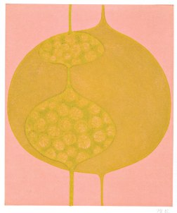 eclipse-yelow-on-pink-web-6x7